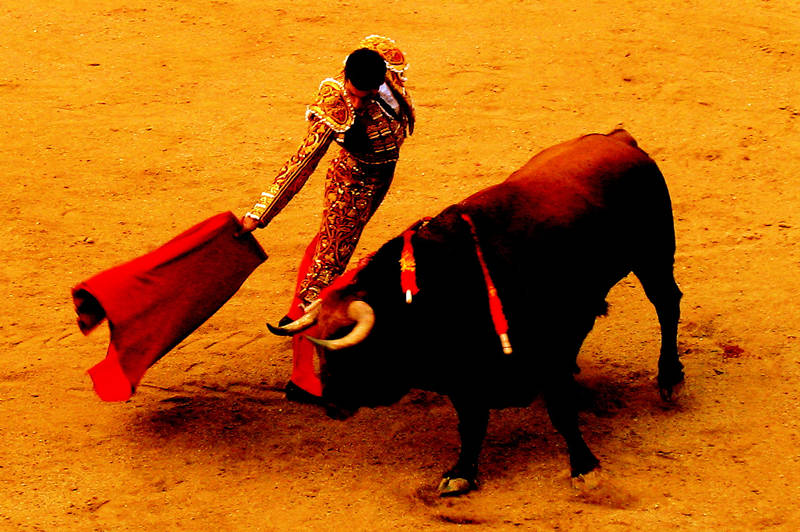 bullfight #4; click for previous post