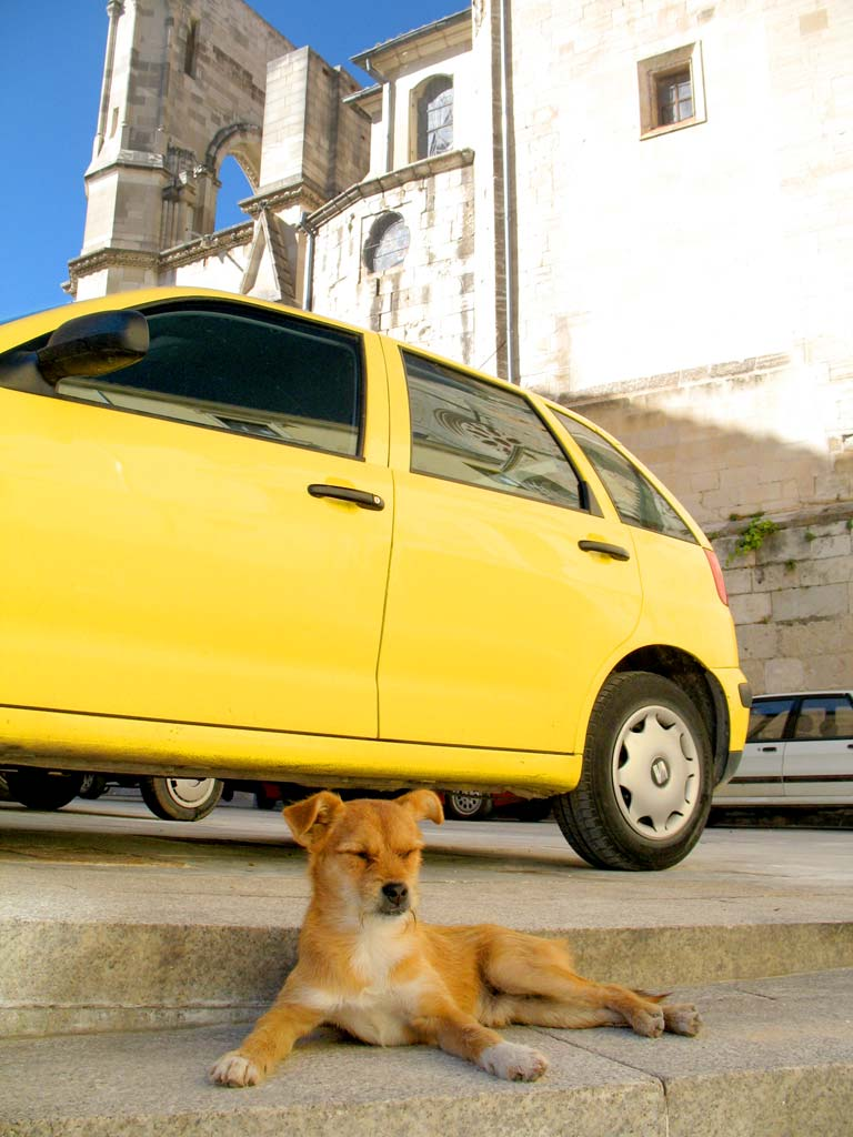 dog and yellow car; click for previous post