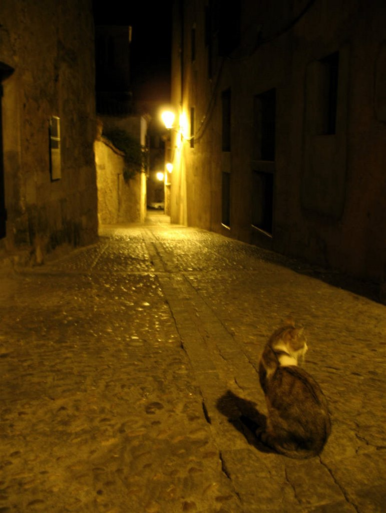 night cat; click for previous post
