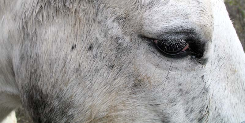 equine eye; click for previous post