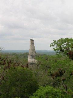 Mayan Ruins - Temple IV, Tikal, Guatemala