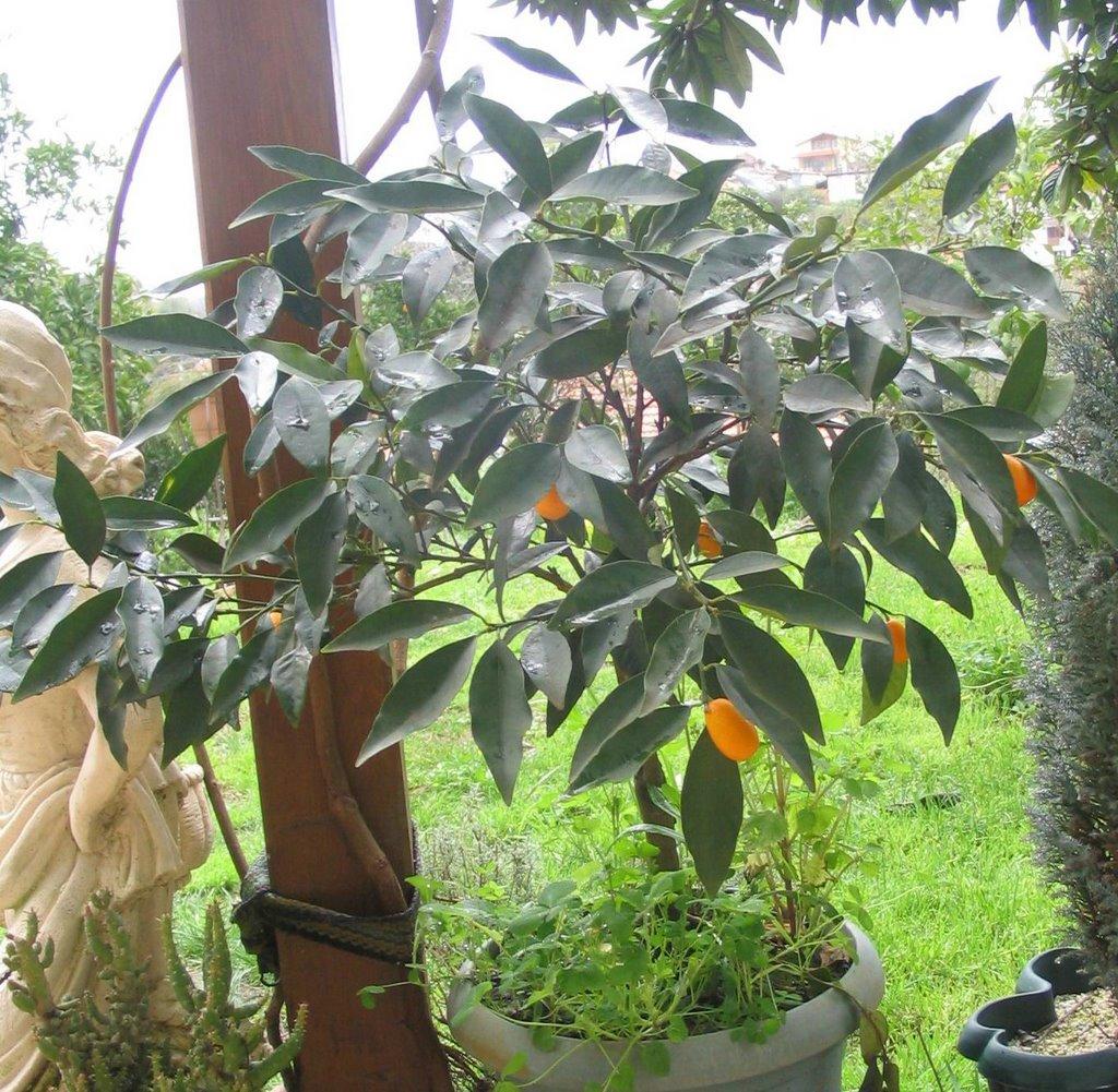 Tüm yaz çilek bahçelerinin tadını çıkarmak için ne yapmalıyım Dikim ve bakım