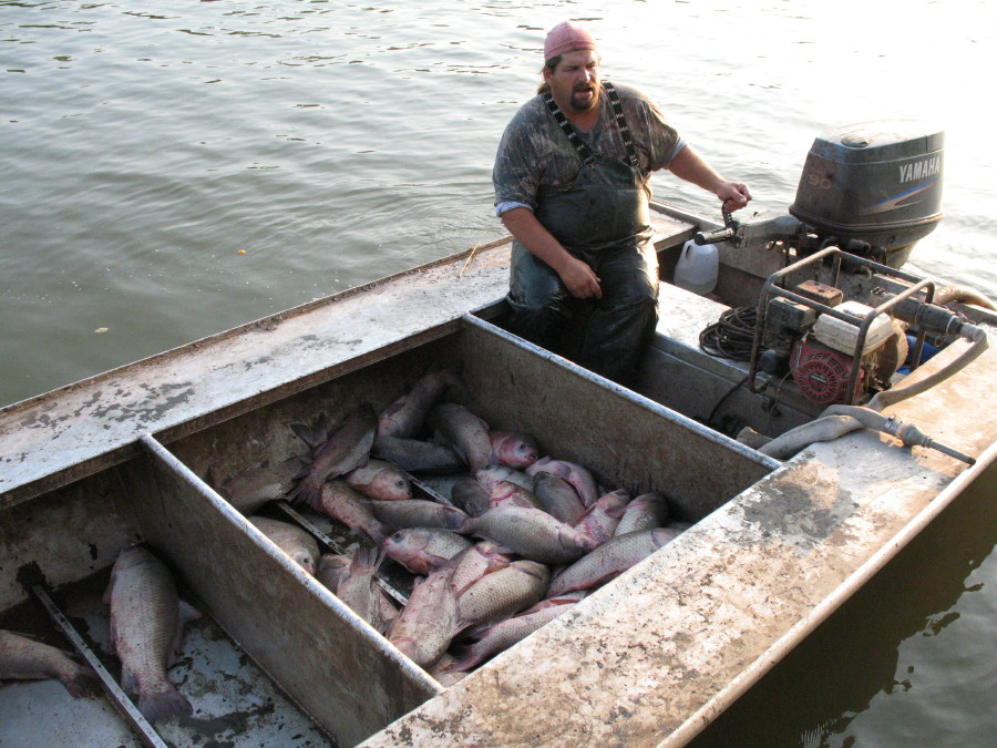 how to set up a fish trap