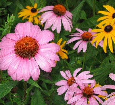 Flowers at Rockefeller Preserve, Pocantico Hills, NY
