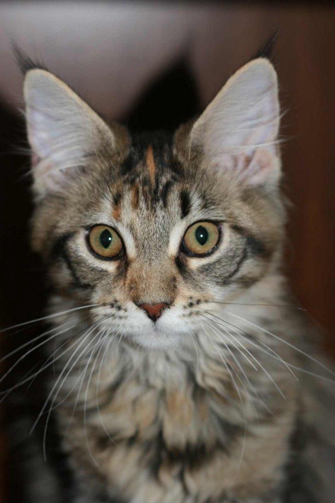 Simon S Cat Kitten Encounter