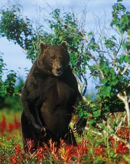 Bärengrüße zum Muttertag