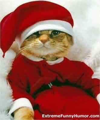 Miss Cellania: The Cat's Christmas
