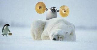 Penguin stupidity