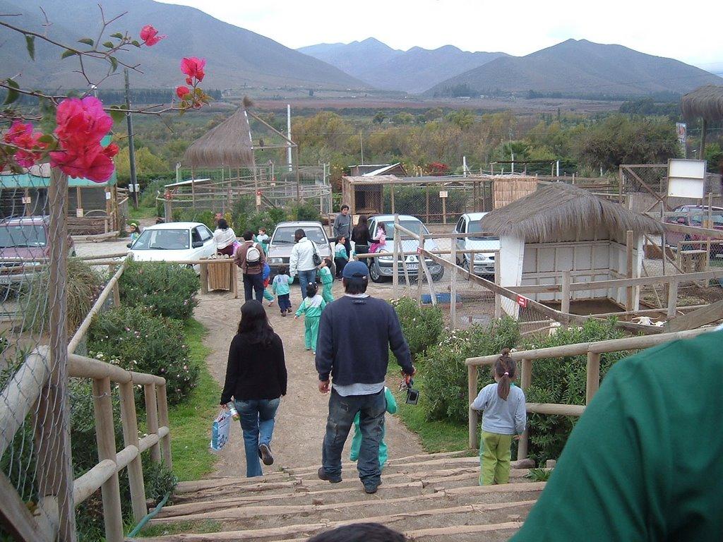 Jardin infantil las abejitas for Amiguitos del jardin
