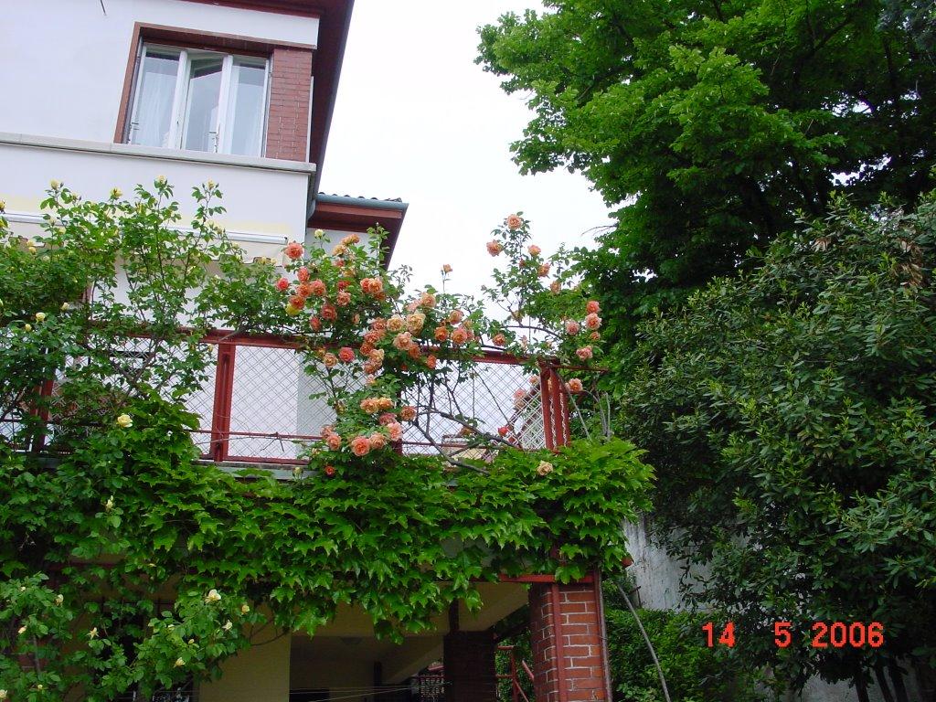 Rococo 2006 for Casa maggio
