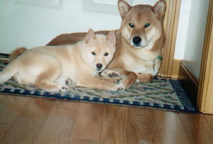 Akira and Shiro