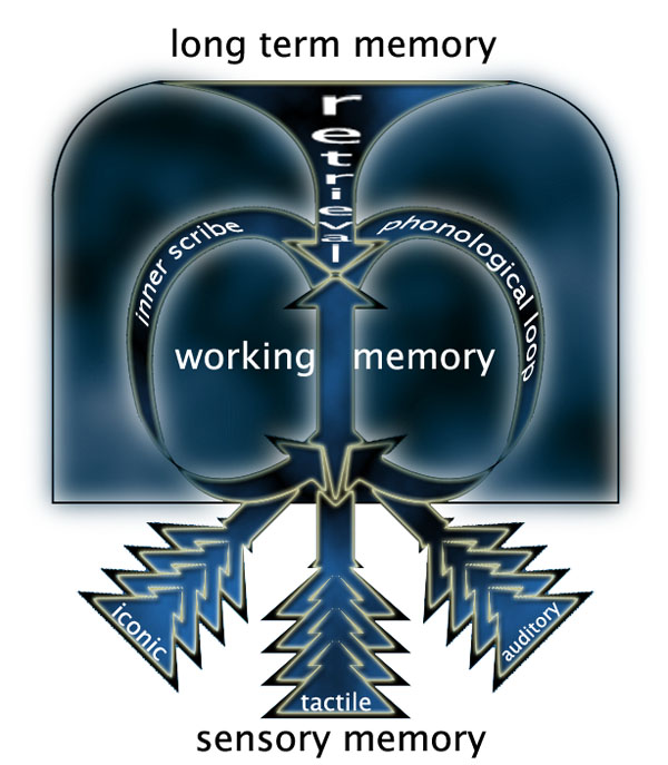 psychology memory essay