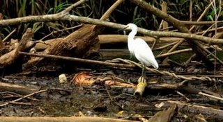 A heron stands on debris-draped logs in the sewage and pollution-filled Tarcoles River in Tarcoles, Costa Rica April 5, 2006. (Juan Carlos Ulate/Reuters)