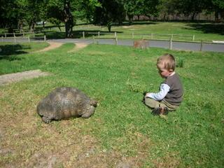 Joel & Tortoise