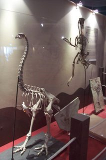 Moa and a Velociraptor