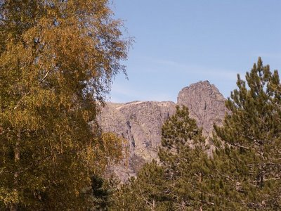 Bétula, pinheiros, Cântaro Magro ao fundo