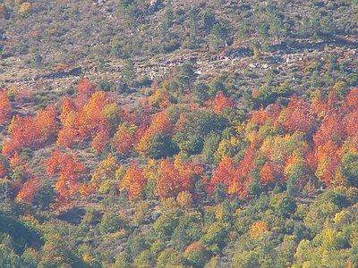 A Sagração do Outono