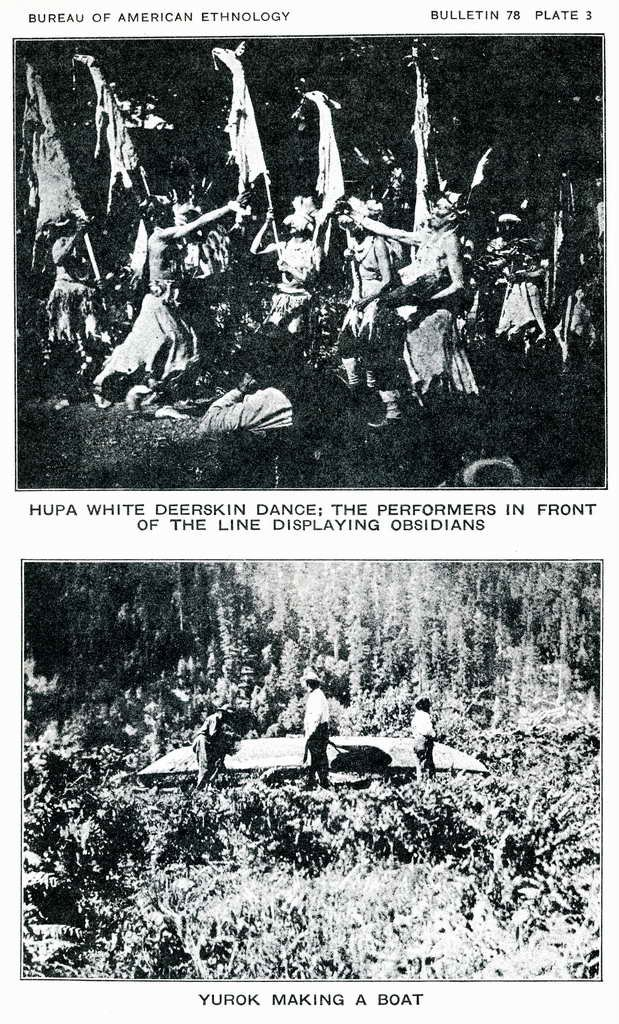 Plate 3. Hupa White Deerskin dance: the performers in front of the line displaying obsidians.