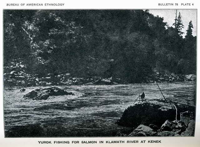 Plate 4. Yurok fishing for salmon in Klamath River at Kenek.