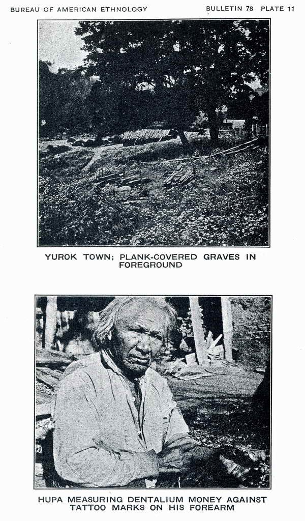 Plate 11. View of Yurok town, with plank-covered graves in foreground.