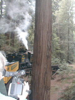 Roaring Camp steam train winding through giant redwoods (Tamara Lynn Scott filming on left; photographer: Michael McNeil)