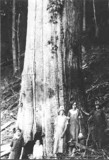 Courtesy Great Smoky Mountains National Park Library