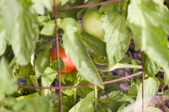 Bliss Organic Garden Cafe Menu