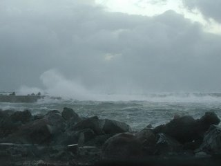 Wild and Woolly in Wellington