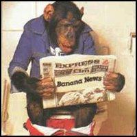 Bathroom Monkey