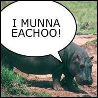 Killer Hippo