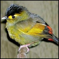 Indian Avian
