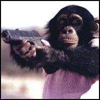 Gun Toting, One Eared, Indian Monkey