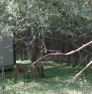 Grazing under the apple tree