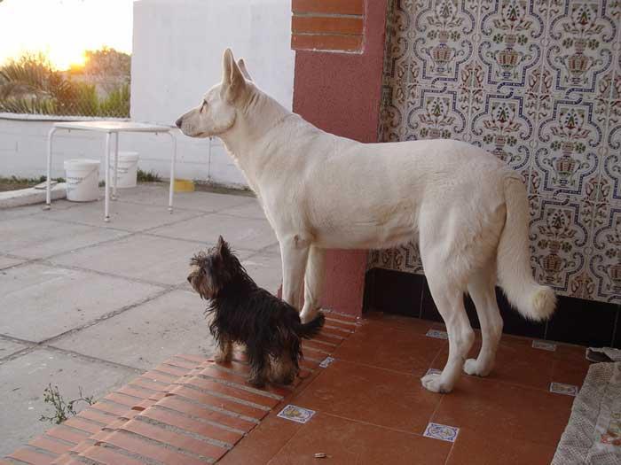 charla perra lechón en Córdoba