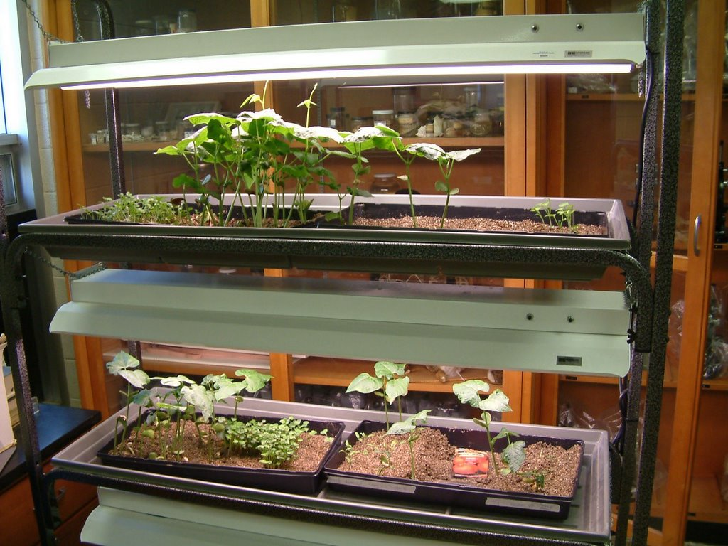 Growing Southern | Garden Blog: Hydroponics in the Classroom- part II