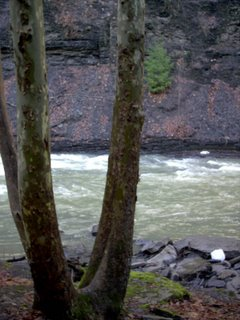 The forest consumes the trail in the middle of the hike, but you are still close to the creek. The gorge narrows.