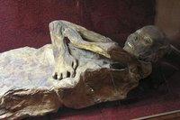 Momia del museo de las Momias de Guanajuato, Méjico