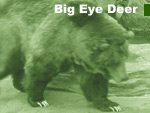 Big Eye Deer - animal, wildlife and nature stories from around the world