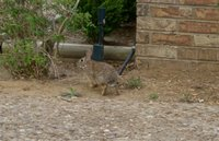 Coelhinho - Little rabbit