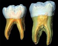 Homo neanderthalensis Neandertal Neandertals (Evolution Research: John Latter / Jorolat)