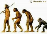 Ape to Man Evolution Sequence Pravda (Evolution Research: John Latter / Jorolat)