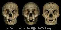 Homo floresiensis hobbit flores (Evolution Research: John Latter / Jorolat)