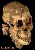 Skull Bipedal Africa Morphology Taphonomy Hadar Formation (Evolution Research: John Latter / Jorolat)