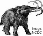 Mammoth (Evolution Research)