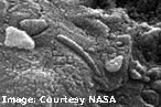 Mars Martian Meteorite Microscopic Bacteria Life Evolution Research