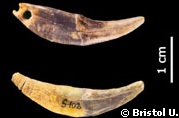 Neanderthal Neandertal Tools Châtelperronian Fées France (Evolution Research: John Latter / Jorolat)