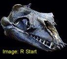 fossil whale oligocene Janjucetus hunderi (Evolution Research)