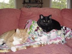 Senior Kitty and Little Kitty in better days