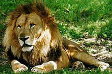 Jesus online el parque zool gico nacional de los cubanos for Jardin zoologico de la habana