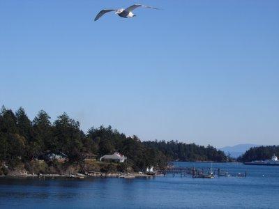 L' île de Vancouver en Colombie Britannique, Canada
